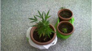 Cannabis sul balcone di casa, due fratelli arrestati