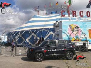 Carabinieri controllano impresa circense, multato e denunciato il titolare