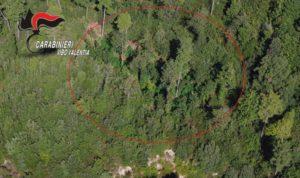 Scoperte dai carabinieri tre piantagioni di canapa indiana