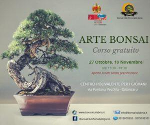 """A Catanzaro un corso gratuito di """"Arte Bonsai"""""""