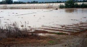 """Nubifragio in Calabria, Coldiretti: """"Prima stima dei danni ammonta a circa 100 milioni di Euro"""""""