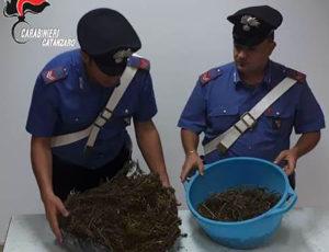 Trovato con 2,450 kg di marijuana in casa, 41enne arrestato nel catanzarese