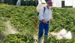 Oltre l'80% della superficie agricola europea contiene pesticidi