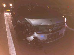 FOTO NEWS |  Auto investe un cinghiale sulla Ss 106 tra Guardavalle e Santa Caterina Jonio