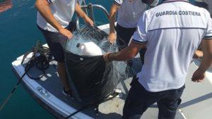 Controlli della Guardia Costiera, sequestrati sei quintali di prodotto ittico