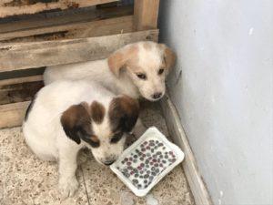 """Due cantonieri salvano cuccioli lungo la Statale 682 """"Jonio Tirreno"""""""