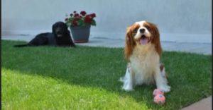 Cane lasciato libero in cortile: inquilino condannato