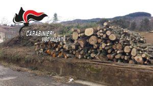 Tagliavano alberi di pino senza autorizzazione, tre boscaioli multati e denunciati