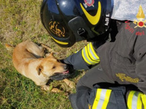 Cane incastrato con la zampa in un filo di acciaio, salvato dai vigili del fuoco