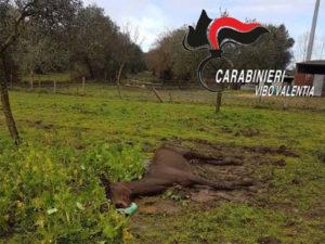 Tentano furto in un'azienda agricola e uccidono a colpi d'accetta un cavallo