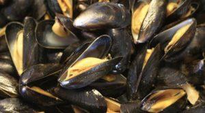 Cozze dalla Spagna contaminate da salmonella, allarme in Italia