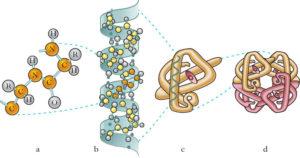 La proteina p53 che protegge gli elefanti dal cancro potrebbe essere impiantata nell'uomo?