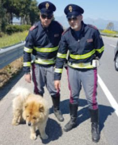 Agenti della Polstrada salvano un cane sulla SS106 ed evitano il peggio