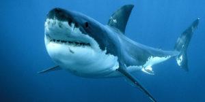 Dramma in Brasile! Un uomo ubriaco è stato aggredito e ucciso da uno squalo mentre faceva pipì in mare