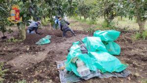 'Ndrangheta – Nascondeva mezza tonnellata di cocaina, arrestato figlio del boss Molè