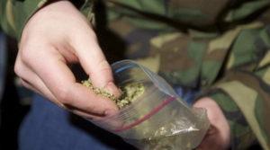 Maxi-sequestro di marijuana in un capannone in disuso