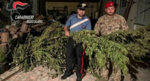 Sequestrato un essiccatoio per la marijuana e droga, avrebbe fruttato circa 900.000 euro