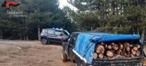 Furto di legna, 70enne arrestato dai carabinieri forestale