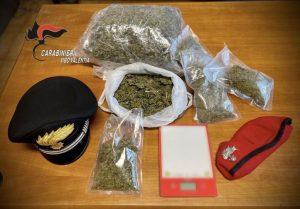 Vasta operazione antidroga in Calabria, sequestrata piantagione con 2000 piante di cannabis