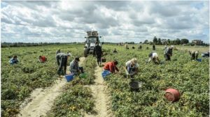 """Caldo record in Calabria, ordinanza regionale: """"vietato lavorare al sole dalle 12:30 alle 16 nel settore agricolo"""""""