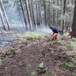 """""""Calabria Verde"""", il punto sulle forze antincendio in campo dopo la visita del ministro Patuanelli"""