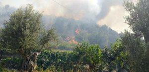 Incendio a Reggio Calabria, in azione task force guidata da Calabria Verde