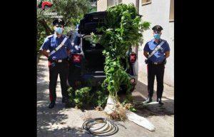 Coltivava cannabis tra gli ortaggi di stagione, 57enne arrestato nel catanzarese