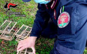 Deteneva illegalmente 18 cardellini catturati in natura, denunciato un 72enne
