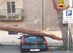 Albero cade su un'auto, tranciati anche i cavi telefonici