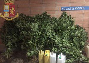 Scoperta una piantagione di marijuana a Catanzaro, il proprietario del terreno denunciato