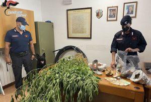 Scoperte 50 piante di canapa indiana e 3 chili di marijuana, 50enne arrestato