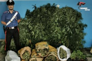 Sequestrati 18 chili di marijuana e 32 piante di canapa indiana, 40enne arrestato