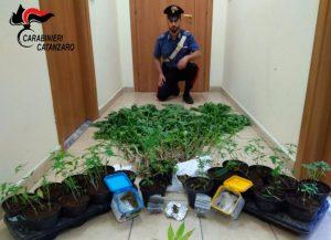 In un terreno vicino casa aveva 64 piante di cannabis, 67enne arrestato a Vallefiorita