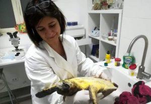 Veterinaria catanzarese premiata per l'impegno nella salvaguardia delle specie marine