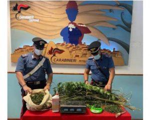 Sorpreso a coltivare una piantagione di marijuana, 24enne arrestato