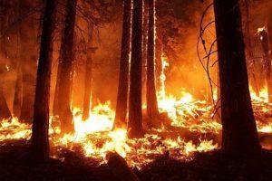 """""""Sugli incendi la Regione Calabria manca di competenze e di un piano efficiente"""""""