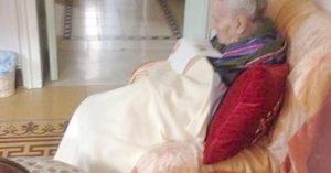 Madre morta mummificata con lettiera per gatti