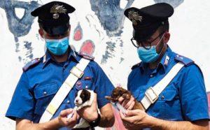 Salvati dai carabinieri sette cuccioli, 23enne denunciato