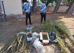 Coltivazione di cannabis indica, due arresti dei carabinieri