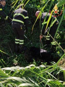 Cane cade in un canalone per l'irrigazione, salvato dai vigili del fuoco