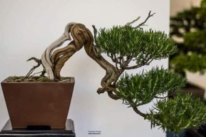 "A Catanzaro la XI Mostra ""Arte Bonsai e Suiseki"""