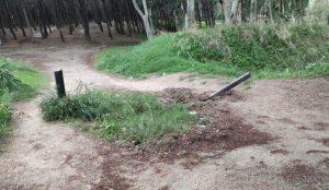 """""""Divelta sbarra accesso area dune pineta di Giovino, amministrazione interverrà per ripristino e installazione videosorveglianza"""""""